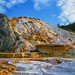 YELLOWSTONE - MAMMOTH HOT SPRINGS by luisrguez