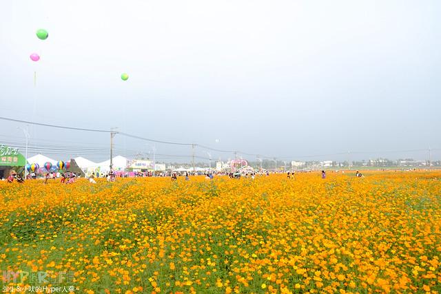 2015台中新社花海14