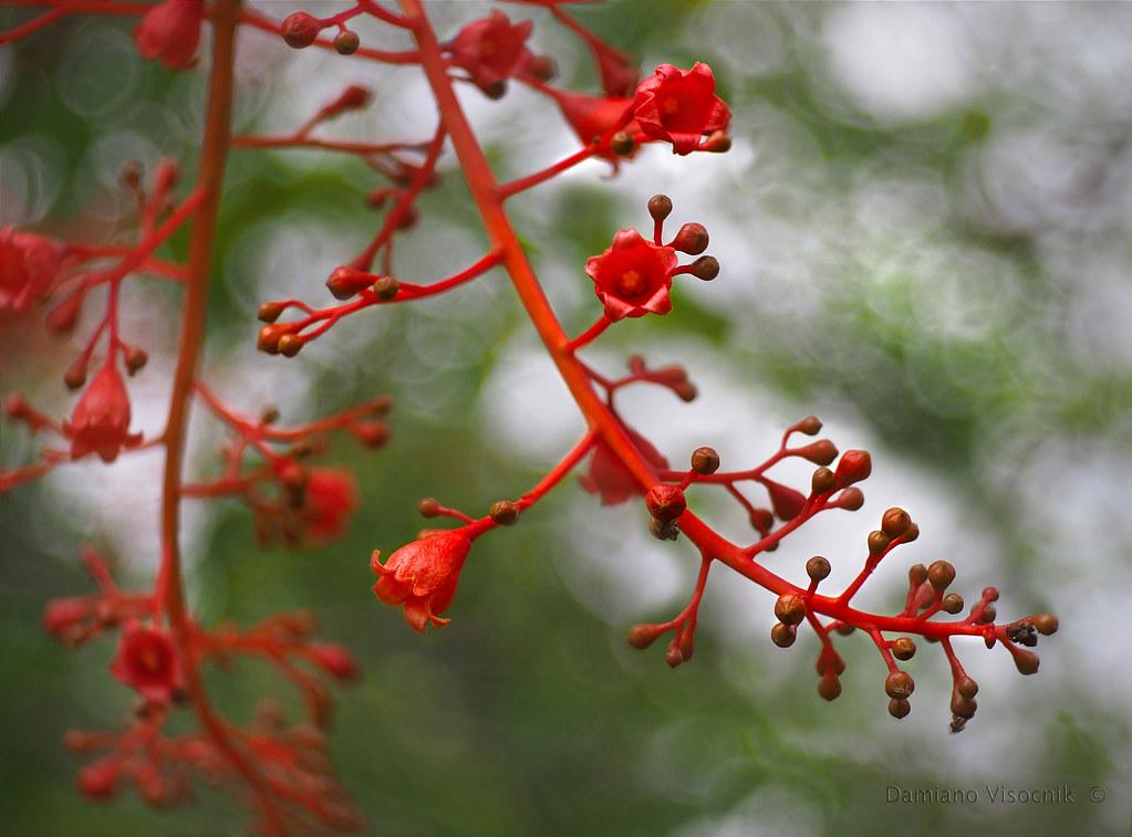 Tree flower_3