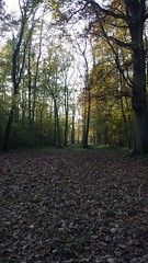 20151031_155532 - Photo of La Neuville-en-Beine