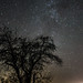 Apple Tree, Milky Way by koperajoe