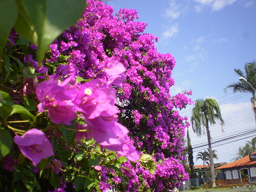 primavera-na-cidade_15188449231_o