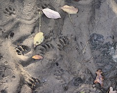 two sets of footprints in the sand...