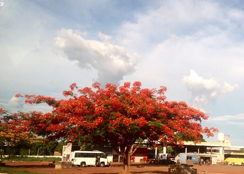 Flamboyant - Gurupi - Tocantins
