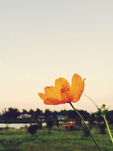 Flower so high!!!