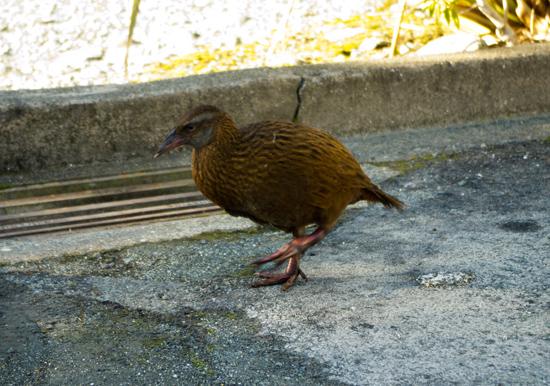 Weka - Milford Sound2 21 7 15 K55637