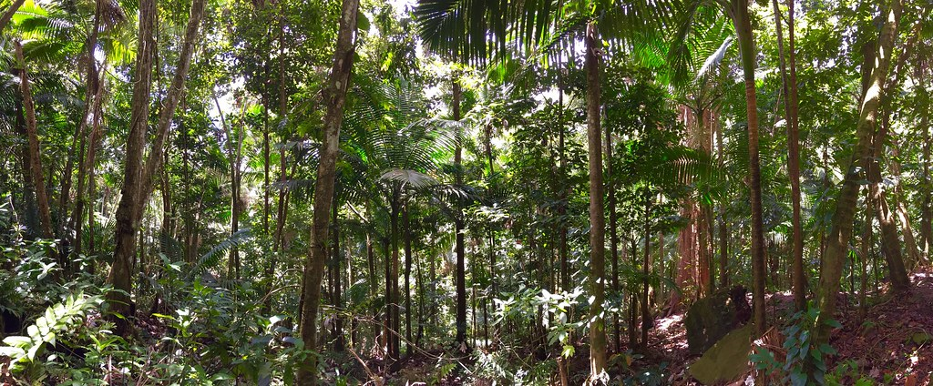 El Yunque, the hunt for El Chupacabra…and swimming holes…