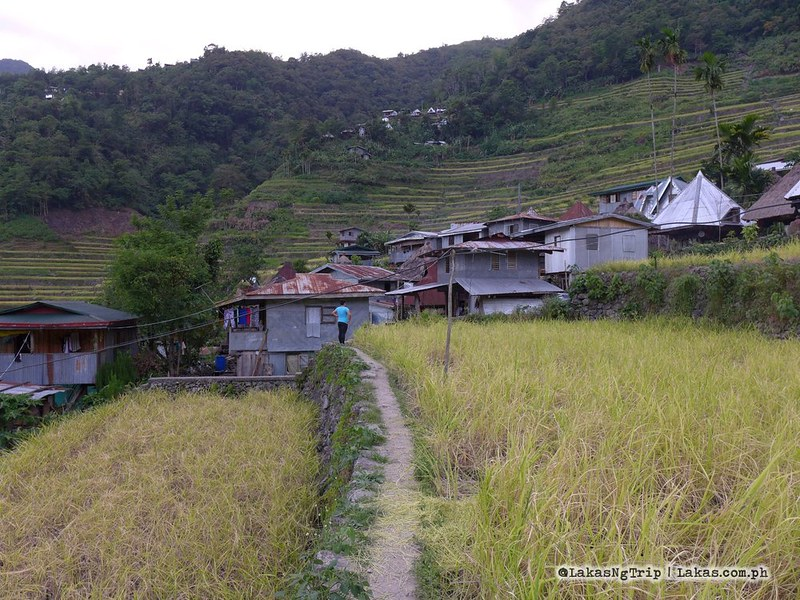 Going around Batad Rice Terraces and Tappia Falls