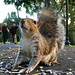 Guard Squirrel (Enhanced) by andyi