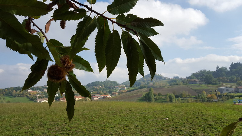 a Vignola: castagne e tigelle 2015