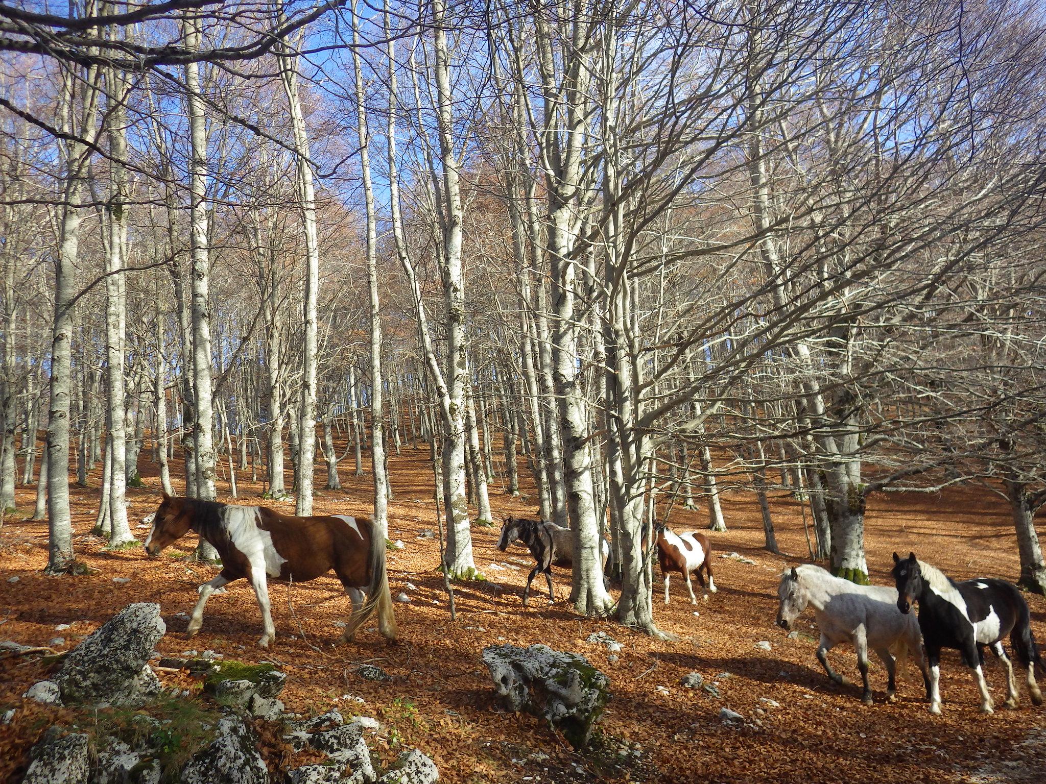 Paesaggi naturali autunnali for Stampe paesaggi naturali