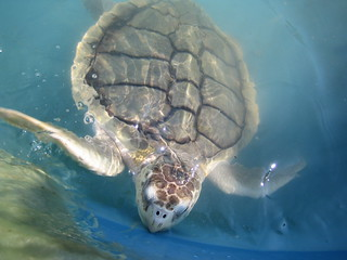 04/16/2005 - 2:47pm - Sea turtle in water