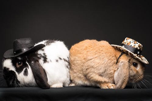 Dueling Bunnies