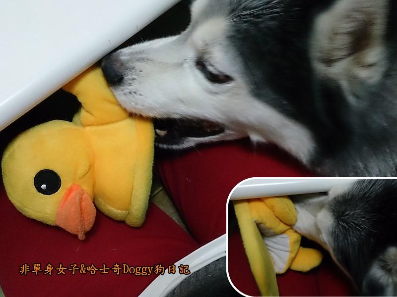 doggy黃色小鴨鞋06