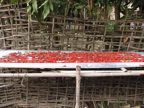 Muang Ngoi: des piments qui sèchent