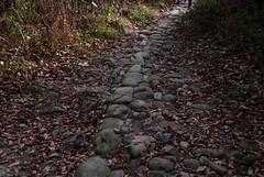 Camino de Maia a Bozate