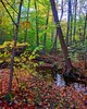 Our creek after a steady rain #fall #fallcolors  #neohio#creek #home