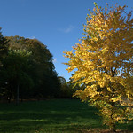 Haslam Park Autumn Photos