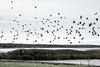 Birds | Haapsalu Estonia