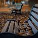 Lonesome Autumn (explored) by klickpix70