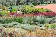 Cranbourne Gardens