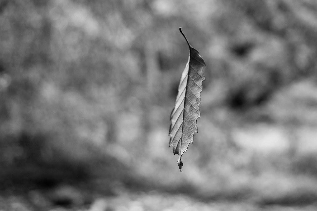 Suspended Leaf 1