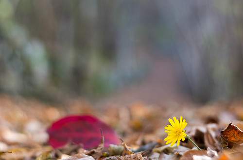 Spring or Autumn? Primavera o Autunno?