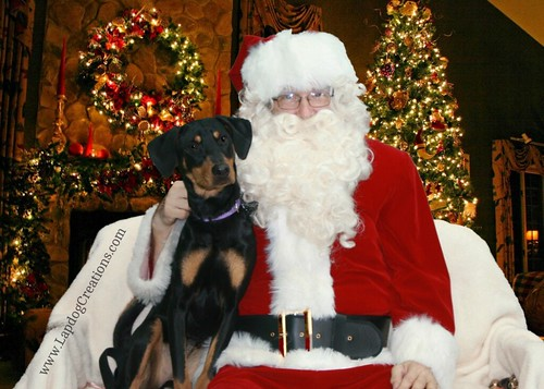 Penny Sitting with Santa - Lapdog Creations