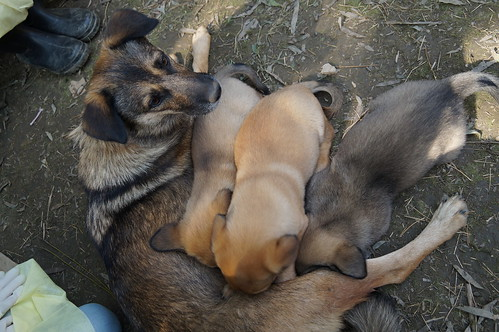 Pups feeding aerial