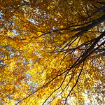 Do, 20.10.16 - 12:41 - Ich liebe Herbstfarben