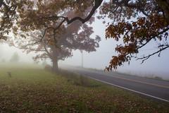 Down the Road, November Morning Fog