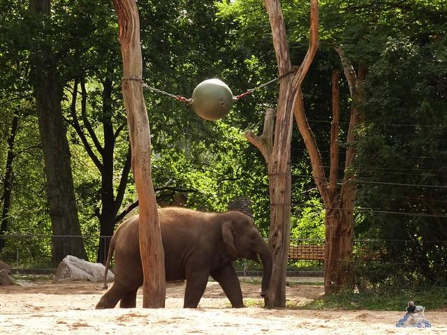 Zoo Berlin 28.08.2015  010