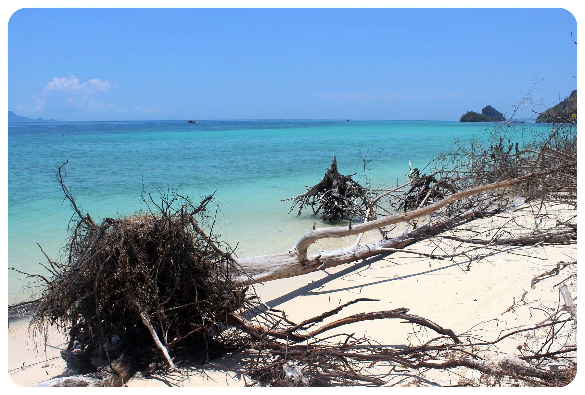 koh poda tree trunks and beach