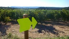 Montpeyroux entre vignes et oliviers