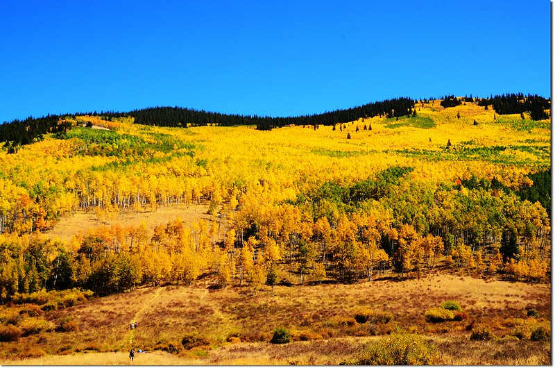 Fall colors at Kenosha Pass, Colorado (32)