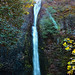 Horsetail Waterfall, Columbia River Gorge, Oregon by Don Briggs