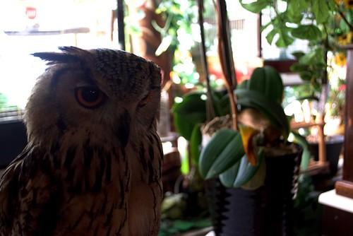 Tokyo cafe experience, Owl no mori