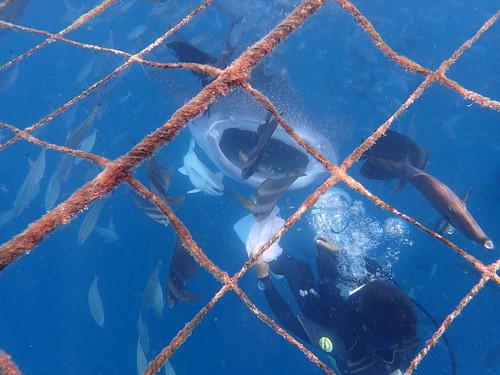 沖繩鯨鯊浮潛(TG-3)