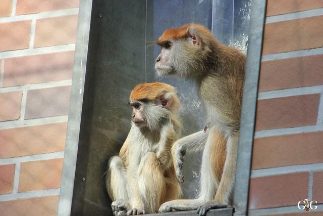 Sonntags-Besuch im Tierpark Friedrichsfelde 04.10.201561