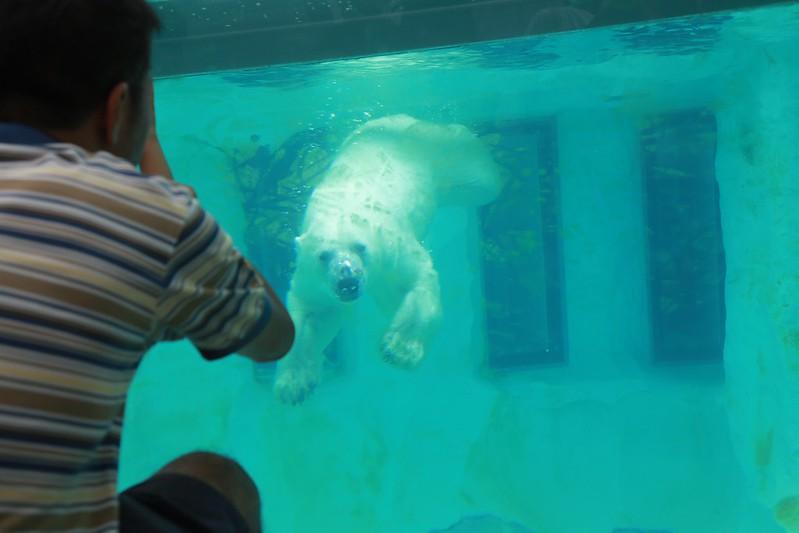 水底下的北極熊