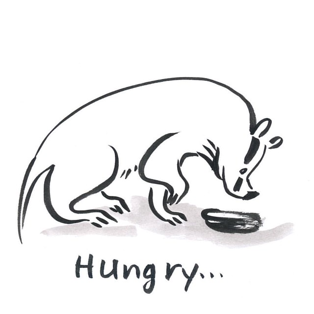 Badger is hungry... #badger #badgerlog #inktober2015 #inktober