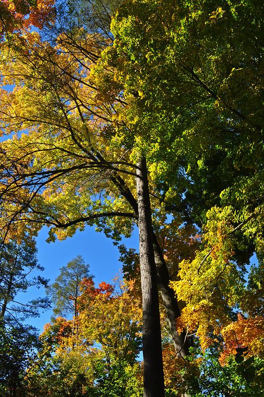 Peirce's Woods (6)