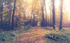 Hockering Woods October 2015