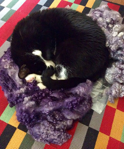 Melvin cat on bed of logwood-dyed Border Leicester locks by irieknit
