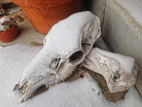 Skull and Snow -s