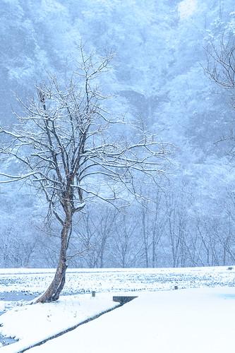 Gokayama Snow.