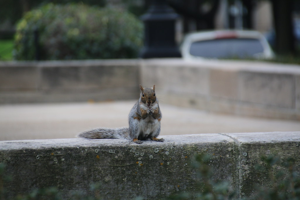 Gilbert M. Simmons Memorial Library & Squirrels (Kenosha, Wisconsin) - October 15, 2016