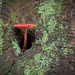 little mushroom that grows out of the hole of a tree trunk by xamad