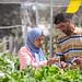 Developing agricultural cooperatives in Palestine / Rozwijanie spółdzielni rolniczych w Palestynie