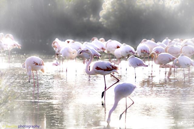 Flamingos on the sunlight